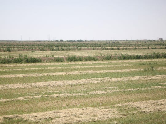 Craig Odgen's ranch is used to grow alfalfa used to