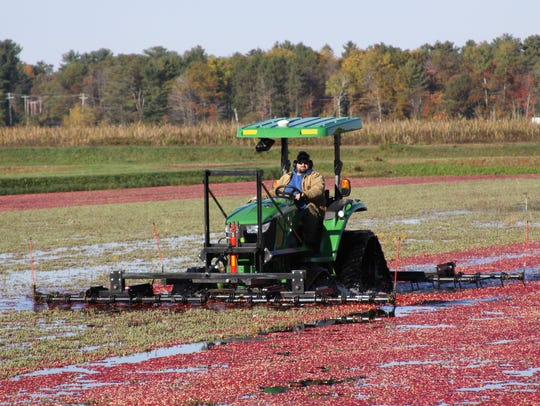 As acres of land have been added to cranberry production, prices have declined. Cranberry farm prices have declined 39 percent since 2012.