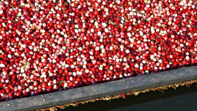 Wisconsin growers produced between 5.85 and 5.9 million barrels of cranberries in 2016.