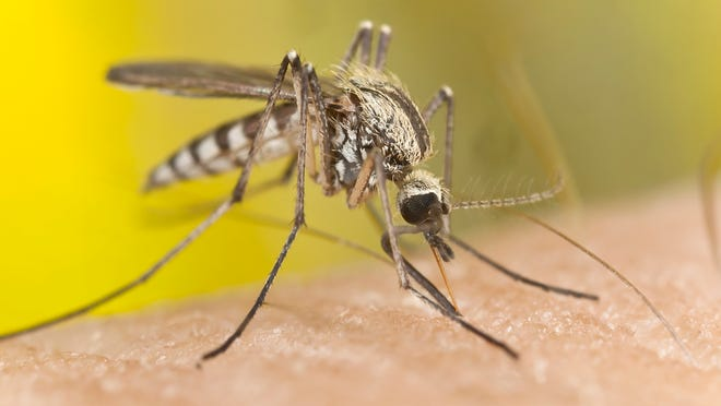 Most mosquito bites don't bring disease, but they sure are irritating.