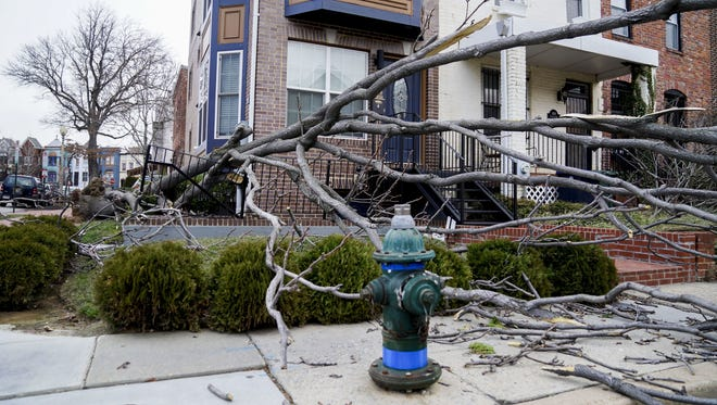 A tree was blown over as the region experienced high winds on March 2, 2018, in Washington, D.C.