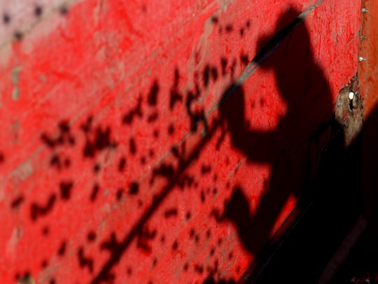 The shadow of Kristen Henslin, owner of Whittlesey Cranberry Co., plays across the bright red truck bed as cranberries fall in and begin to fill up on the last formal day of cranberry harvest, October 21, 2016.