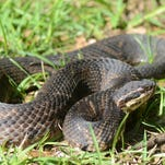 House bill would declare venomous snakes as inherently dangerous under state law.