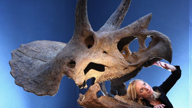FSU researchers found that as a result of its sharper teeth, Triceratops could more precisely slice its food, which mostly consisted of plants and shrubs, allowing it to have a greater diversity in its diet and a key evolutionary advantage over other herbivorous dinosaurs.