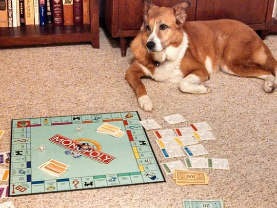 Every good dog should know how to play Monopoly.