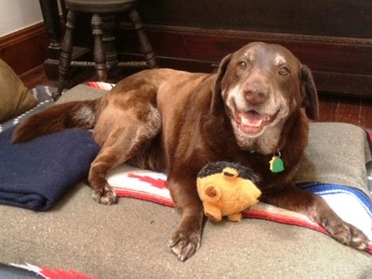 Tess keeps smiling. Here she is in her new forever home.