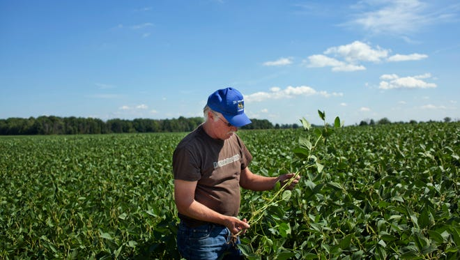 Jim Reid, of Grant Township, inspects some of his soybean crop Wednesday in Grant Township.