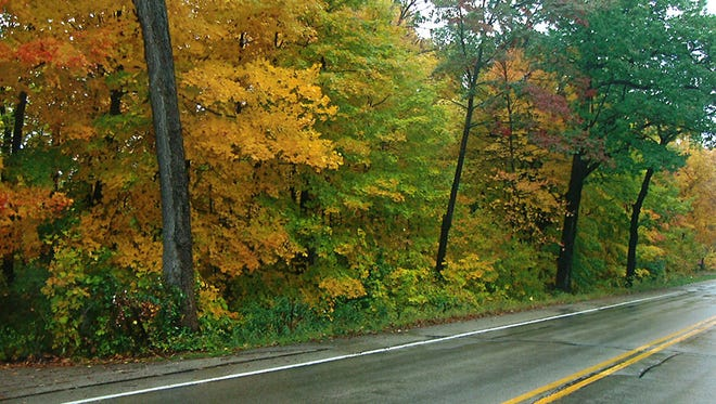 Trees along Hwy 45 that will be removed for road expansion.