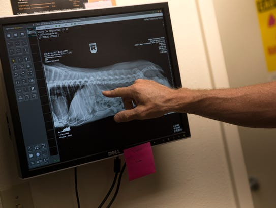 Veterinarian Darren Woodson looks over an X-ray Wednesday