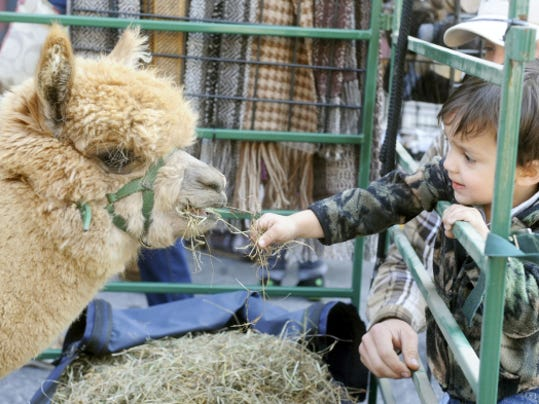 Gabriel Frysinger reaches out to feed one of the alpacas from Painted Spring Farm during the Go Green event in York City last year. This year's expanded event will feature 60 vendors downtown.