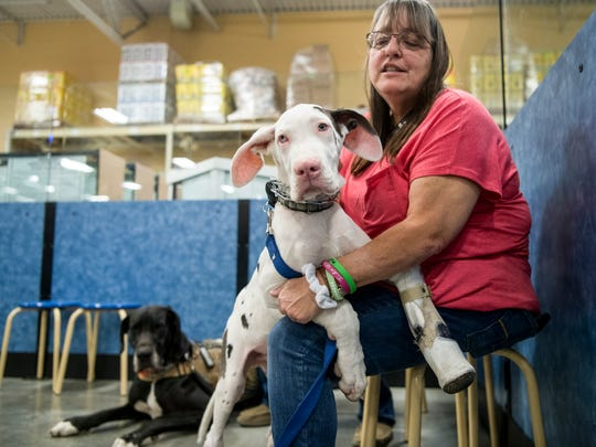 Pam Lawrence hugs her Great Dane puppy Furgus during his puppy training class at PetSmart in Evansville, Ind., Saturday, Oct. 21, 2017.