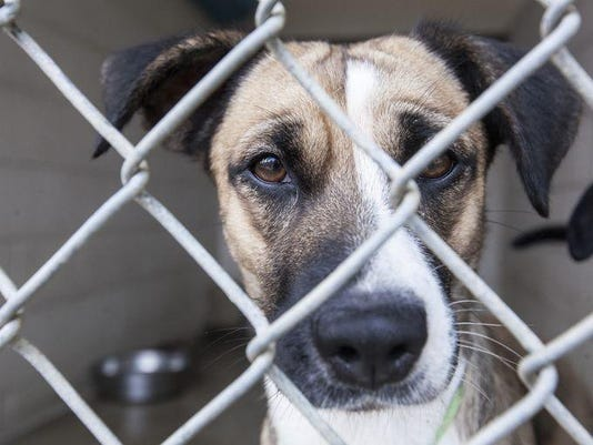 Animal shelter sad dog face