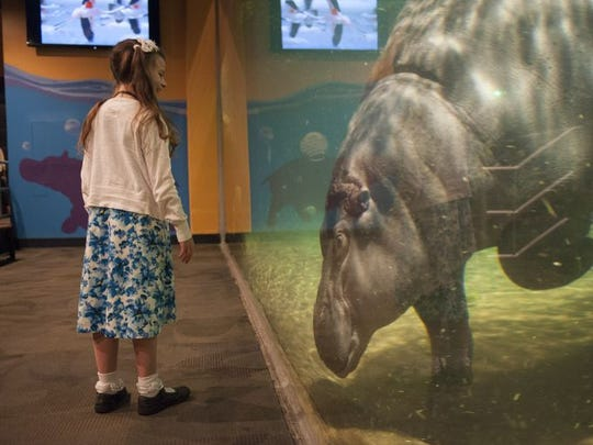 You can almost get nose to nose with a hippo at Adventure Aquarium in Camden.