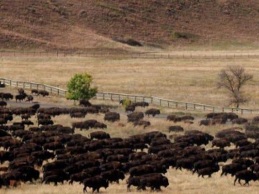 Buffalo Roundup.png