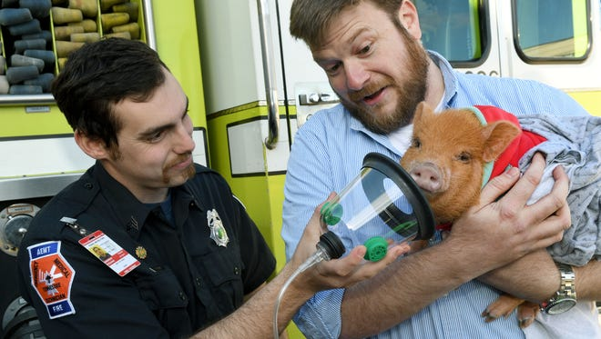 Rural/Metro Fire Department Sgt. Andrew Fizzano demonstrates an air mask on Tipsy the pig Thursday, Feb. 16, 2017. John Miller, right, with Invisible Fence donated 16 of the animal masks to Rural/Metro for use on emergency scenes.
