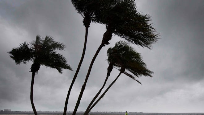 A man rides his bike on Bayshore Boulevard as palm trees begin to feel the wind in Tampa, Fla., on Sept. 10, 2017.
