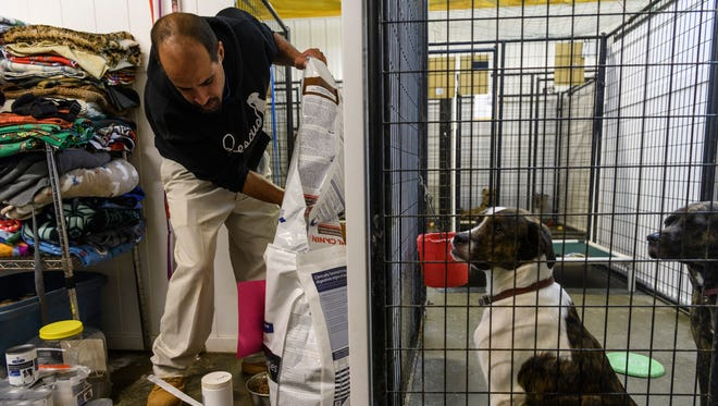 Kennel Technician Jerry Jones (left) fills bowls of food as Bonnie and Clyde, two labrador retriever and pit bull terrier mixed dogs, wait to be fed during dinner time at It Takes A Village, a no-kill canine rescue, in Evansville. The shelter typically cares for around 100 dogs by using foster families and by housing them at the facility on North Stockwell Road.