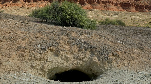 This large desert tortoise burrow can be found near the Bearclaw Poppy Trail.