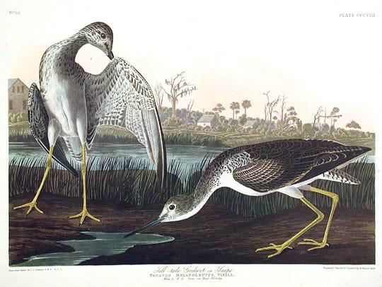 John James Audubon visited both Mala Compra and the