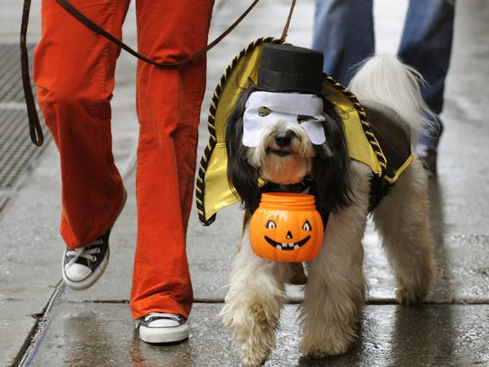 Some dogs enjoy wearing costumes; others get stressed