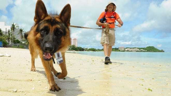 Search and Rescue volunteer Richard Burkhart and his rescue dog, Hunter, assist local and military rescuers in their efforts to search for a swimmer reported lost in waters off Tumon on Aug. 10, 2015.