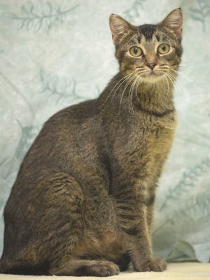 Rescue cat of the week: Krinkle