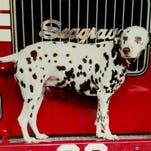 Dalmatian mascot 'Twenty' looks on as firefighters take a break between ceremonies at FDNY Ladder 20 Engine 13 September 11, 2009 in New York City.