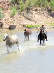 Racing the river with his herd.