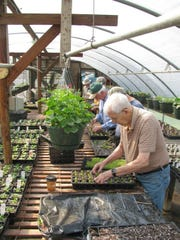 Members of the Men's Garden Club of Asheville at work