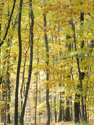 Fall colors are coming into the Manitowoc County area, and will provide for a backdrop to the Woodland Dunes Enchanted Forest event.
