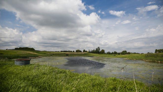 A wetland near Center Lake in Sprit Lake.