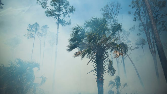 In this file photo take on March 26, 2018, an interior fire picks up as rangers strengthen the containment lines during the Greenway Fire in Picayune Strand State Forest.