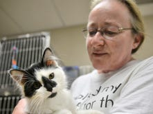 Humane Society: Too many cats in the cages