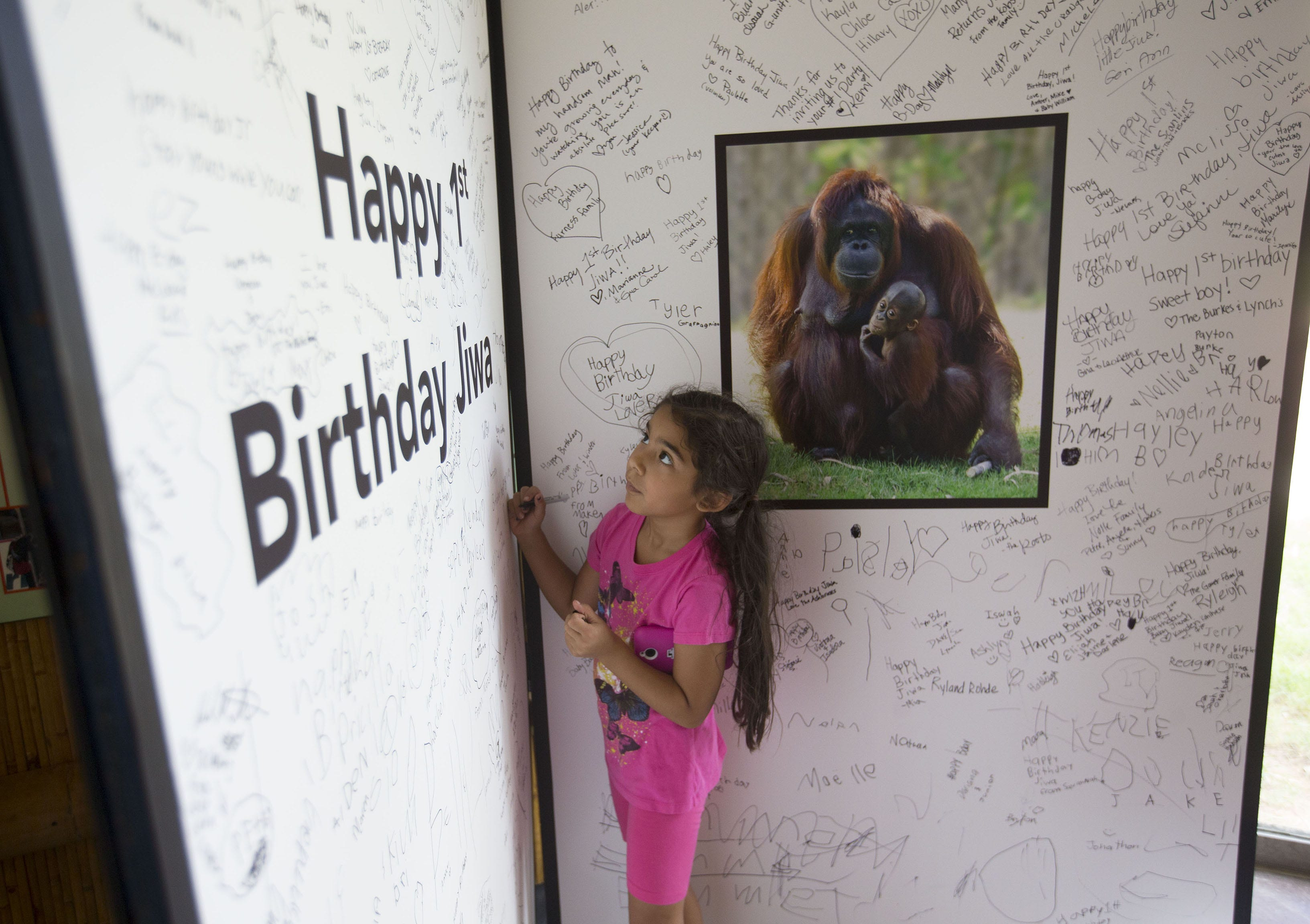 Birthday Party Phoenix Zoo Image Inspiration of Cake and
