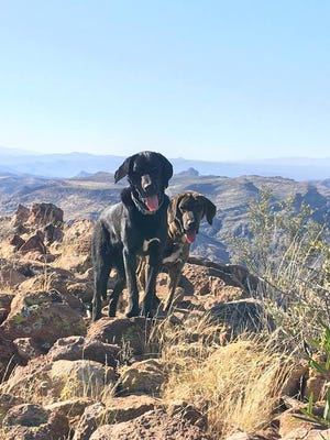 Hikers found two dogs on the summit of Picket Post Mountain near Superior, Arizona.
