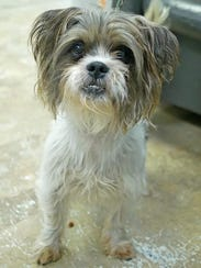 Barkley is a little dog who only wants a home of his