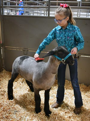 Nine-year-old Leila Dillard represented Valley View 4-H with her project sheep Friday at the Bridwell Ag Center. The Wichita County Junior Livestock Show continues Saturday and is open to the public.