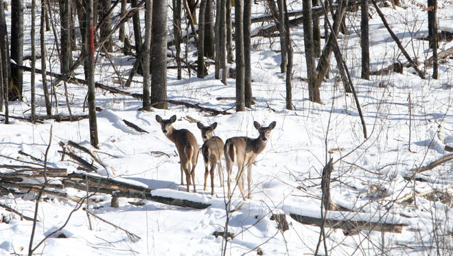 The Natural Resources Board approved a measure by the DNR to increase the anterless deer harvest goal to 276,515, an 8% hike
