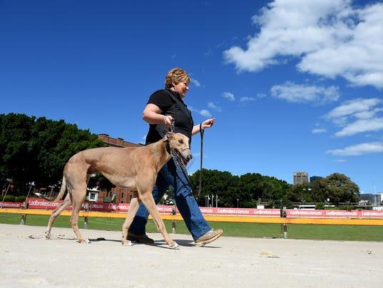 EPA AUSTRALIA NSW GREYHOUND RACING BAN SPO SPORTS EVENTS AUS NE