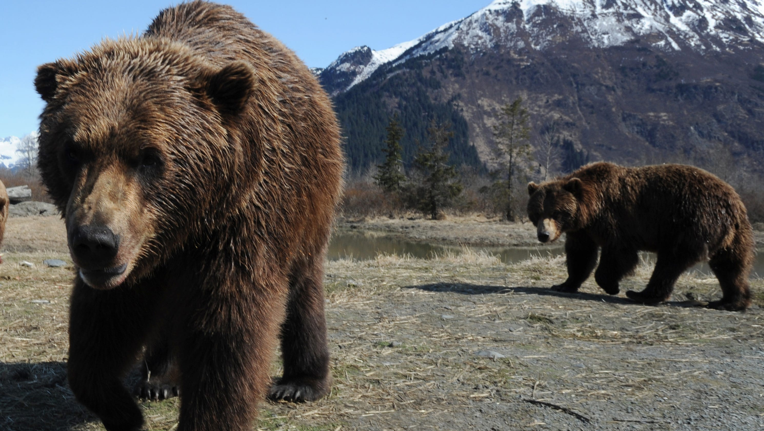 hunting show host charged with poaching in alaska