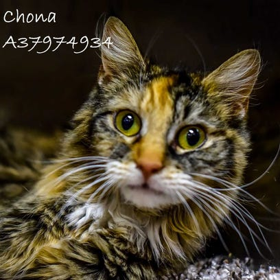 This week's adoptable animals