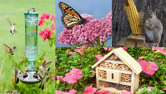 10 popular products that will attract wildlife to your