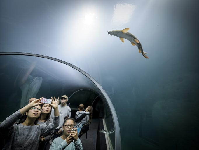 Visitors watch a fish in a glass tunnel on the opening