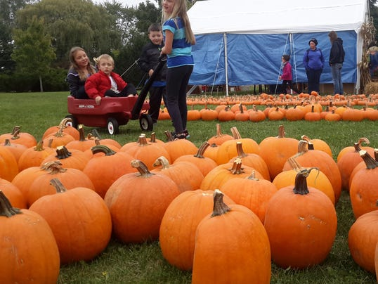 636420238963690430-Pumpkin-Patch-photos-Magner-kids-and-others.jpg
