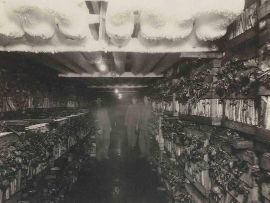 """This circa 1923 photo shows men inside the Webster Cooperative Cold Storage building. According to a book written by Esther Dunn, the storage space """"provided for 50,000 barrels of apples."""""""