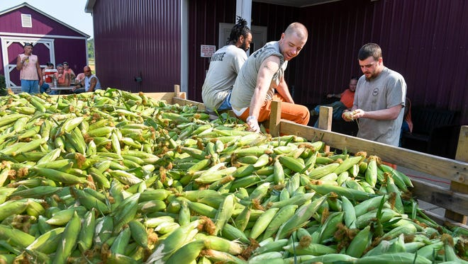 Henderson County Detention Center inmates are seen here shucking a 3,000-pound wagon of sweet corn in July 2017. Last year, the detention center had nearly 25 acres of vegetables producing thousands of pounds of produce for the center and local non-profits.