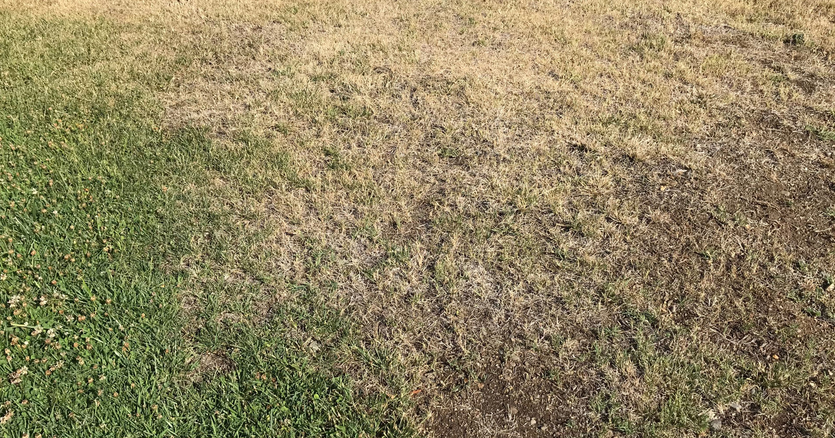 What to do if your lawn gets spotty