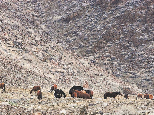 A herd of stray horses grazes in the foothills east
