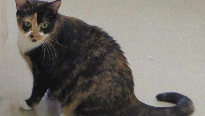 Tica enjoys spending time around humans. Why not stop by and meet her?