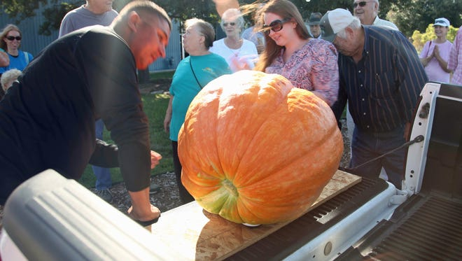 A pumpkin is weighed at the third annual Giant Pumpkin Contest in San Angelo.